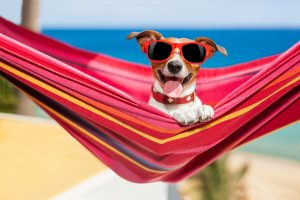 dog, wearing huge sunglasses, is relaxing on a fancy red hammock at the beach