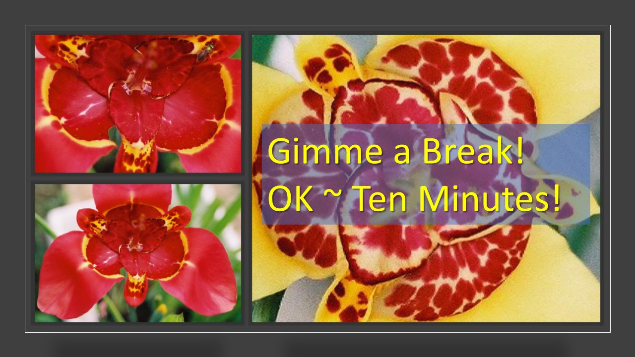 "Infographic bright red and yellow flowers, banner says ""Gimme a Break - OK Ten Minutes"" My Persuasive Presentations"