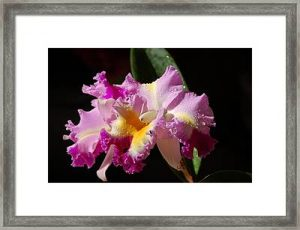 Nancy's Novelty Photos in Pixels Products Framed Print