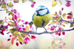 Spring Bird by Photographer Jill Wellington