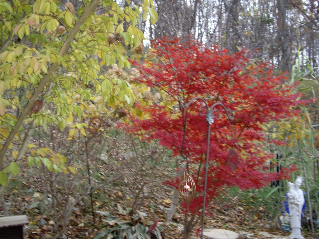 Fall trees: bare or yellow-green and red leaves as mentioned in the poetry