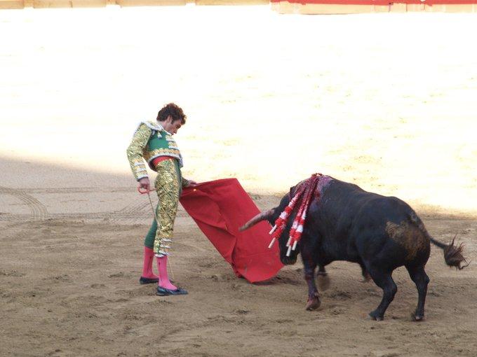 injured bull facing matador with red cape