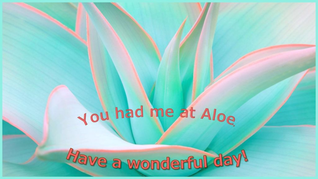 """""""You had me at Aloe. Have a wonderful day."""" words overlaid on image of an aloe vera cactus."""