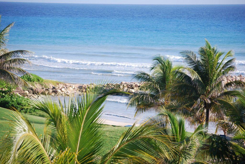 tropical shore viewing the ocean
