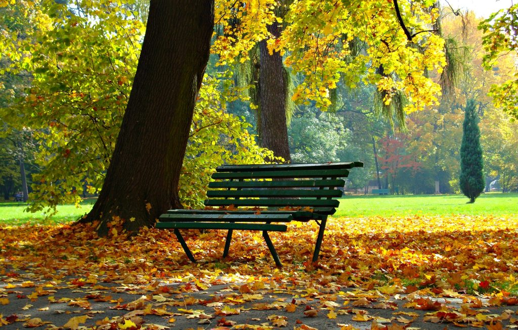 A wooden park bench beside a large tree trunk with autumn leaves all around - photo by Dariusz Staniszewski